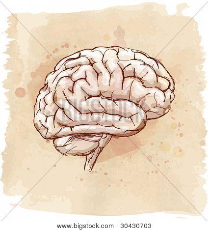 brain sketch & vintage background. Bitmap copy my vector