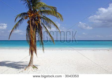 Playa de Tulum con Palma de coco