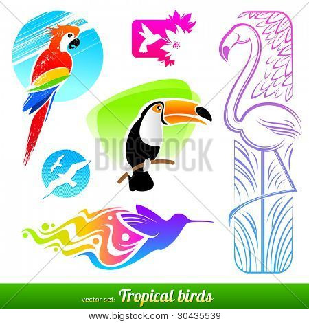 Vector set of stylized decorative tropical birds
