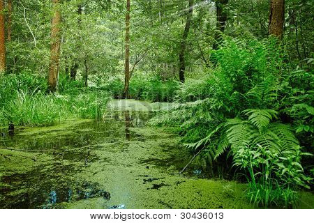 Marsh And Swamp - Landscape