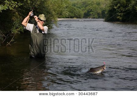 Fisherman catches of salmon (pink salmon) on the river.