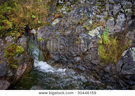 Natural source of mineral curative water. Wild taiga region of Primorsky Krai (Primorsk Territory). Russia.