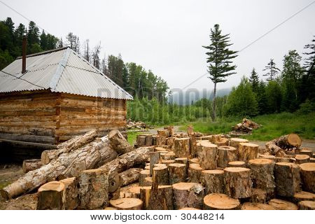 Deforestation. Wooden house in a coniferous forest.
