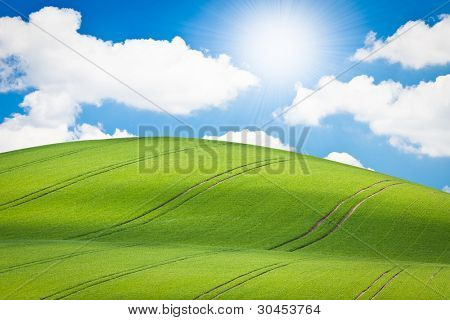 beautiful green field during springtime