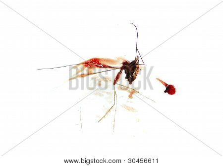 Squished Bloody Mosquito