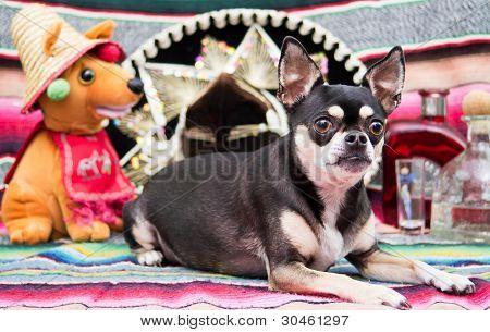 Cinco De Mayo Mexican Dog