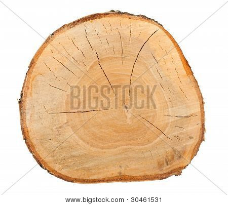 Top View Of A Birch Stump
