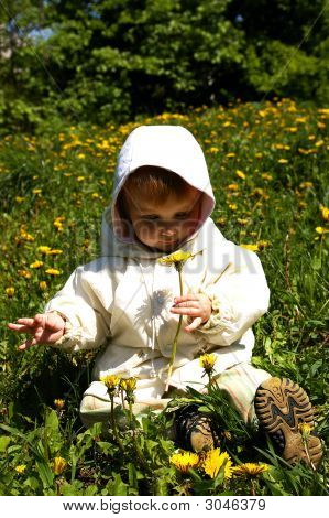Beautiful Girl Holds A Yellow Dandelion