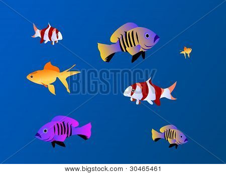 tropical fishes under water