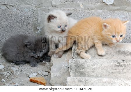 Colorful Group Of Kittens