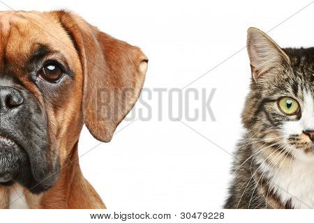 Dog And Cat. Half Of Muzzle Close Up Portrait