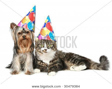 Yorkshire Terrier And A Norwegian Forest Cat In Festive Cones Resting