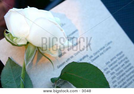 Hochzeit weiße Rose