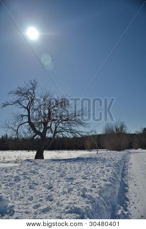 Sun Over Winter Tree
