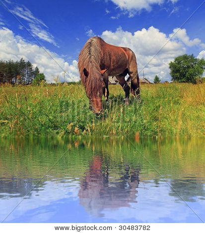 The horse is grazed on the bank of lake