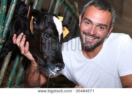 a farmer caressing a calf slobbering milk
