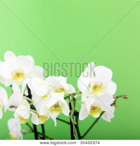 Bouquet Of Fresh Orchids