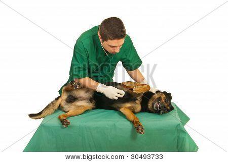 Doctor Vet Examine Dog