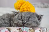 Little, Gray Kitten Sleeps Tight, Spoils A Kitten, Selective Focus poster