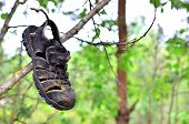 An Old Abandoned Baby Shoe Is Suspended From A Tree In The Forest. The Concept Of The Direction Of T poster