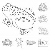 Isolated Object Of Amphibian And Animal Sign. Collection Of Amphibian And Nature Stock Symbol For We poster