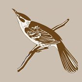 picture of crossbill  - thrush silhouette on white background - JPG