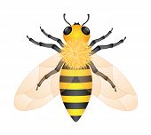 foto of honey-bee  - Illustration of honey bee isolated on white background - JPG