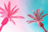 Two Tall Palm Trees On Toned Gradient Pink Blue Sky With Light Fluffy Clouds. Creative Trendy Summer poster
