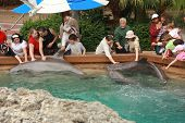 Orlando, Florida - March 14: People Touching Dolphins By Their Hands In Orlando Seaworld On March 14