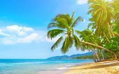 Beautiful Beach. View Of Nice Tropical Beach With Palms Around. Holiday And Vacation Concept. Tropic poster