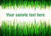 stock photo of drow  - green grass drowing upside and from bottom with text space - JPG