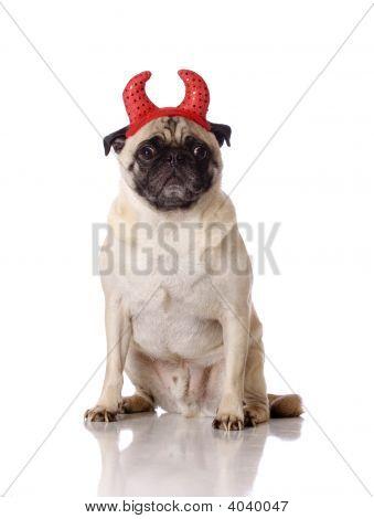 Pug Dog With Devil Ears