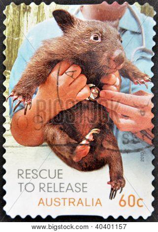A stamp printed in Australia shows Tasmanian devil rescued