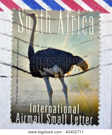 SOUTH AFRICA - CIRCA 2000: A stamp printed in RSA shows an ostrich circa 2000