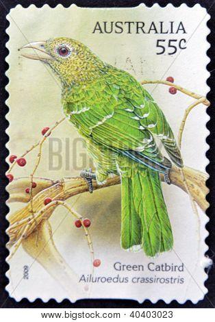 AUSTRALIA - CIRCA 2009: A stamp printed in Australia shows Green Catbird Ailuroedus crassiostis circ