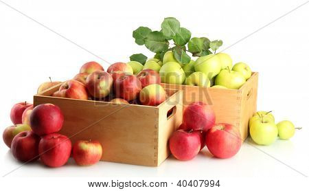 juicy apples with green leaves in wooden crates, isolated on white