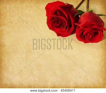 old paper texture with two  dark red roses
