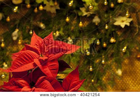 Red poinsettia flower against Christmas decoration