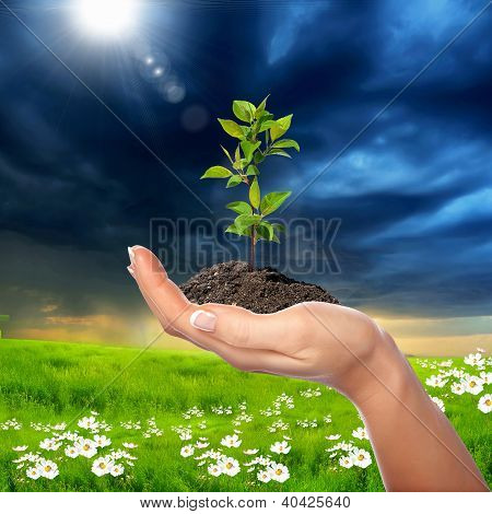 Hands holding green sprouts