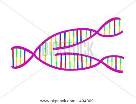 Dna Replicating