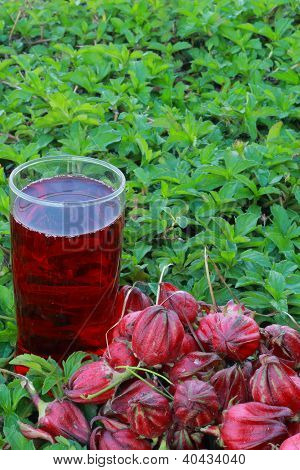 Roselle with juice