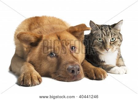 Dog And Cat Together Wide Angle