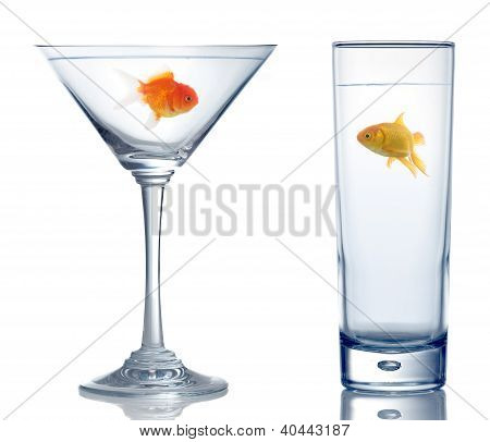Two Different Goldfish In Two Different Glass