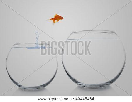 goldfish moving up