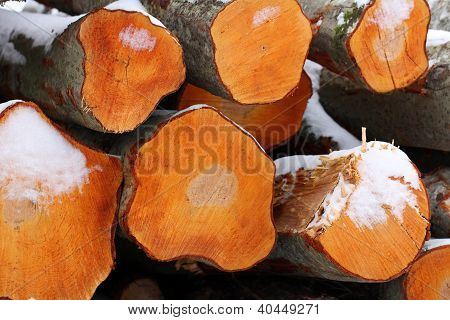 Freshly Cut Aspen Logs