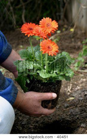 Spring Planting 4