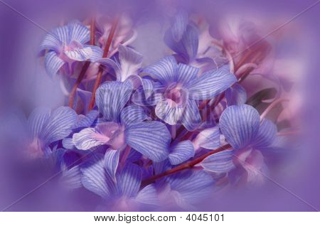 Flower Illustration In Purple, With Vignette