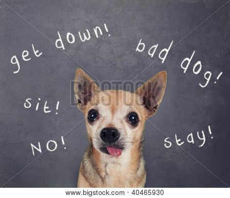 a dog in front of a chalkboard with commands written on it