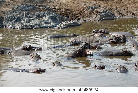 Hippos And Sandy Shore