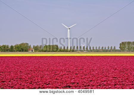 Windturbines in the countryside from the Netherlands